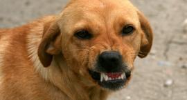 Problem agresywnych psów - jest odpowiedź urzędu