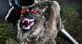 Wilki na dziki