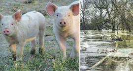 Szansa na wsparcie dla rolników i spółek wodnych