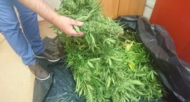 Narkotyki w polu