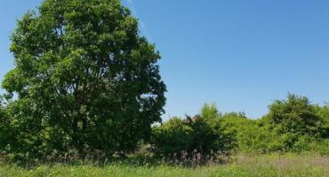 Park odpoczynku - zielona oaza na Brzezinach potrzebuje naszych głosów!