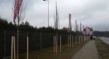 170 nowych drzewek w tym miesiącu na Białołęce