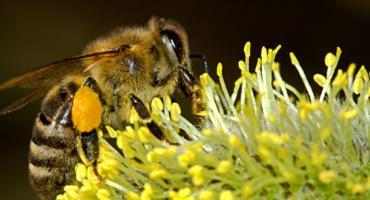 Pszczoły zamieszkały na Białołęce i to... na dachu Urzędu Dzielnicy