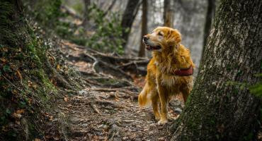 Ocena międzynarodowa pracy psów myśliwskich- terminarz