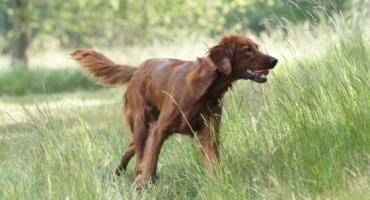 Naturalne zachowania psów - cz. II
