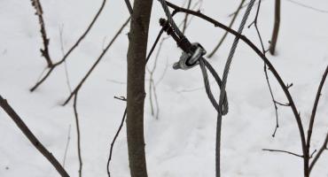 Metodyczny kłusownik: zdradziły go ślady na śniegu