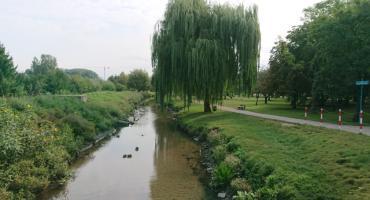 W Parku Antoniuk powstanie sad, który naucza