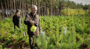 Leśnicy przed zimą mają pełne ręce roboty
