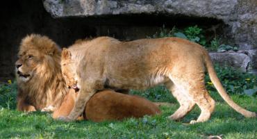 Zwierzaki z warszawskiego zoo wracają na łono natury