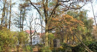 Park w Szczecinku: To jest dąb z historią