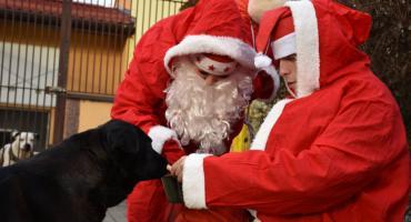 Zwierzęta w schronisku w Szczecinku także obchodzą mikołajki