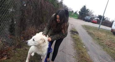 Schronisko dla zwierząt w Szczecinku przypomina: Nie jesteśmy hodowlą psów rasowych!