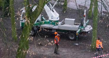 W Szczecinku likwidują gniazda ptaków i przycinają drzewa. Teraz będzie czyściej?