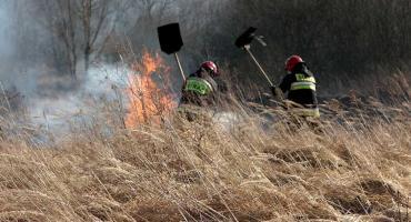 Wypalanie traw. Wiosenna zmora leśników i strażaków właśnie wróciła