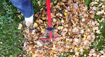 Dłużnicy alimentacyjni w Szczecinku będą grabili trawniki