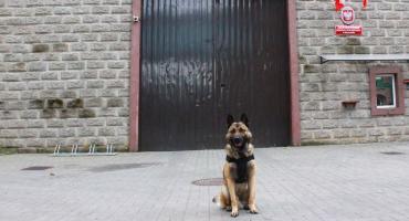 Nero, czyli czworonożny funkcjonariusz Służby Więziennej w Szczecinku