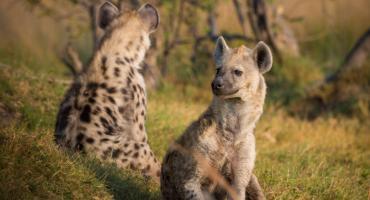 Wycieczka Botswana - raj dla miłośnika afrykańskich klimatów