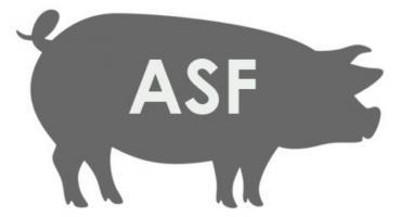 ASF w sąsiednim powiecie