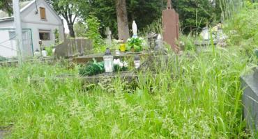Wysoka trawa na Nowym Cmentarzu