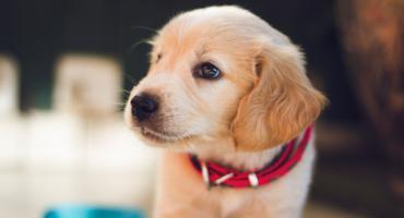Jak wybrać suchą karmę dla psa? 3 wskazówki