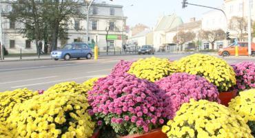 Barwne jesienne kwiaty