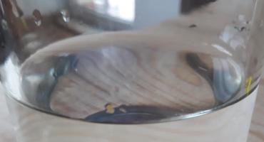 Woda z wodociągu Wierzbna już zdatna do spożycia