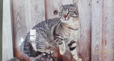 [FOTO] Koty uczniów SP2