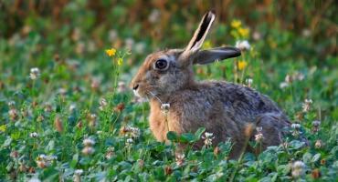 Pogoda na Wielkanoc: Może popadać