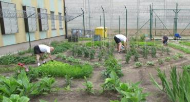 Ogrodoterapia za murami więzienia