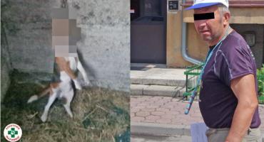 Akt oskarżenia za powieszenie psa. Znamy szczegóły okrutnego przestępstwa