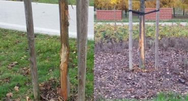 Ktoś uszkodził lipy w Parku Jana Pawła II [FOTO]