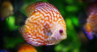 Jak wybrać pokarm dla rybek?