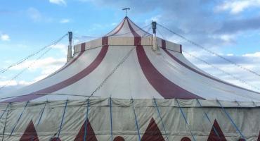 """""""Nie dla cyrku ze zwierzętami"""". Będzie protest w Pile"""