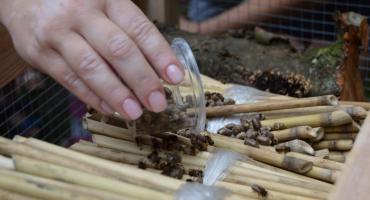 W Parku Miejskim w Pile stanął hotel dla owadów [VIDEO][ZDJĘCIA]