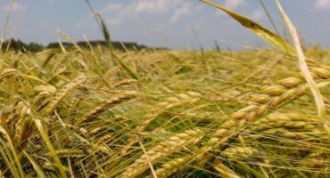 Rolniku, poniosłeś straty z powodu suszy? – złóż wniosek!