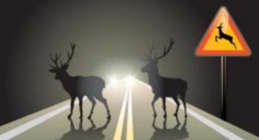 Uwaga na dzikie zwierzęta na drodze
