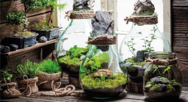 Zrób to sam – ogród w słoju
