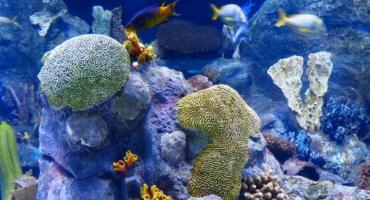Skuteczne systemy czyszczenia akwarium