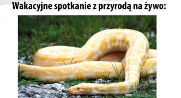 Żywe węże w Garwolinie