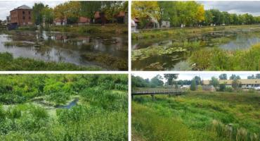 Rzeka jak pole ryżowe, kanał Ulgi jak trzęsawisko – Kto za to odpowiada?