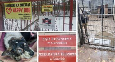 Właściciel schroniska Happy Dog z zarzutami znęcania się nad zwierzętami