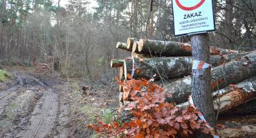 Las na Smolarni w Bytowie do wycięcia?