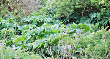 Las barszczu przy osiedlu
