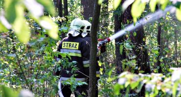 Leśna akcja strażaków w Kępie - na szczęście ćwiczebna