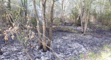 Strażacy walczyli z pożarem lasu w Czerwonym Borze