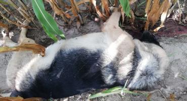 Zastrzelono dwa psy w Nowym Laskowcu. Policja bada sprawę [foto+video]