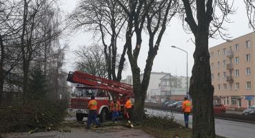 Przy ul. Norwida w Złotowie trwa przycinanie drzew