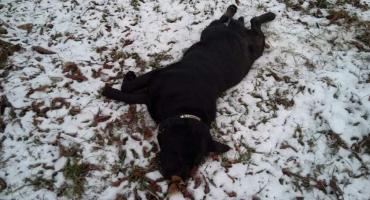 Ktoś wyrzucił psa z samochodu