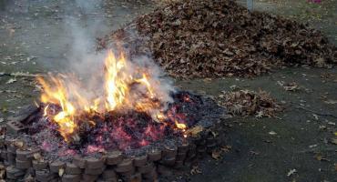 Spalisz liście - otrzymasz mandat