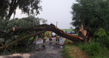 Powalone drzewo na trasie Zakrzewo-Wersk
